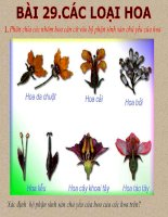 thuyết trình sinh học các loại hoa