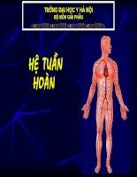 Bài 4: Giải Phẫu Hệ Tuần Hoàn
