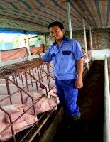 Đánh giá năng suất sinh sản của lợn nái Pietrain kháng stress và Duroc nuôi tại Trung tâm Giống lợn chất lượng cao – Trường Đại học Nông nghiệp Hà Nội