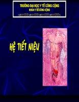 Bài 7: Giải Phẫu Hệ Tiết Niệu