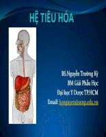 hệ tiêu hóa - bộ môn giải phẫu học đh y dược tp hcm