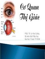 cơ quan thị giác - bộ môn giải phẫu học đh y dược tp hồ chí minh