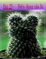 thuyết trình sinh học -biến dạng của lá (7)