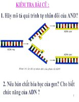 thuyết trình sinh học -  mối quan hệ giữa gen và arn (6)
