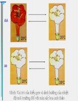 sinh học 12 bài 13. ảnh hưởng của môi trường lên sự biểu hiện của gen