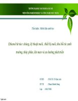 Tiểu luận : Nhiên liệu sinh học chế biến ethanol từ tảo