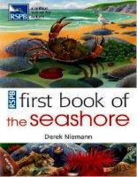 first book of seashore