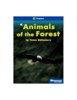 animals of the forest