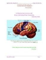 Sử dụng mô hình hiển thị các vùng chức năng của vỏ não trong bài 47 sinh học lớp 8