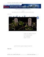 xử lý đất ô nhiễm vi sinh vật