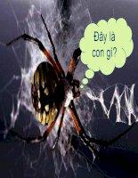 bài 25 lớp hình nhện-sinh hoc 7