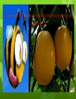 chiến lược phát triển sản phẩm nước ép bưởi mật ong (bưởi teen)