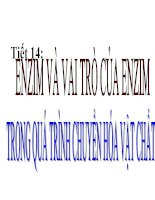 bai 14: enzim vai tro cua enzim trong qua trinh chuyen hoa vat chat