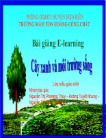 slide bài giảng cây xanh và môi trường sống