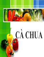 báo cáo tiểu luận công nghệ chế biến rau quả chủ đề cà chua