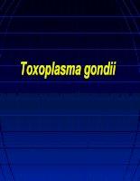 Ký sinh trùng Toxoplasma gondii