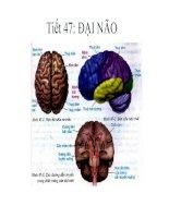 Giáo án sinh học 8 bài đại não bồi dưỡng thao giảng thi giáo viên giỏi tham khảo (10)
