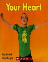 Bài tiếng anh viết về Tim (04 your heart )