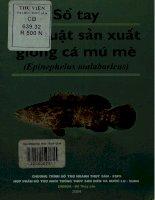 Sổ tay kỹ thuật sản xuất giống cá mú mè (Epinephelus malabaricus)