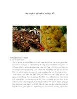 Dự án phát triển chăn nuôi gà đồi Hiệu quả từ việc xây dựng mô hình nuôi gà thả vườn theo hướng sản xuất hàng hóa.