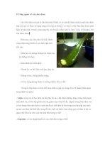 báo cáo thực hành sản xuất nước nha đam
