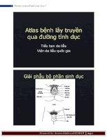 Atlas bệnh lây truyền qua đường tình dục, Tiểu ban da liễu Viện da liêu quốc gia