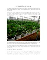 Kỹ thuật trồng cây Dâu tây