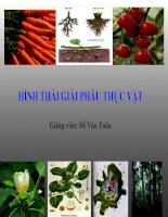 Bài giảng Hình thái giải phẫu thực vật  GV. Đỗ Văn Tuân