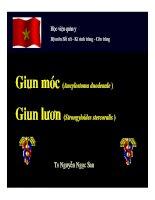 Bài giảng giun móc, giun lươn , TS.Nguyễn Ngọc San bộ môn sốt rét kí sinh trùng và côn trùng học viện quân y