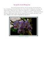 Sự quyến rũ của hoa phong lan