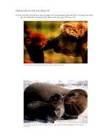 Những màn tỏ tình của động vật.doc