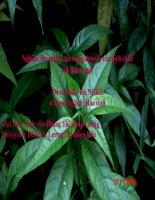 Nghiên cứu một số tác dụng dược lý của dịch chiết cây Hoàn ngọc
