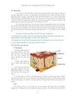 Ứng dụng Laser trong thẩm mỹ điều trị tổn thương ở da