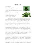 báo cáo thực hành trà rau má
