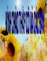 bài đọc thêm:ô nhiễm đấn do phân hóa học và thuốc bảo vệ thực vật