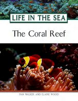Life in the sea the coral reef