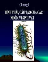 Bài giảng hình tái cấu tạo của các nhóm vi sinh vật
