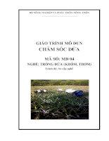 Giáo trình dạy nghề trồng dứa mô đun chăm sóc dứa