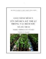 giáo trình mô đun kỹ thuật trồng và chăm sóc  nghề trồng cây có múi