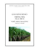 giáo trình mô đun trồng mía nghề trồng mía đường