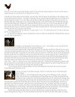 Bài văn tham khảo dành cho ôn tập TLV khối 4 2010-2011