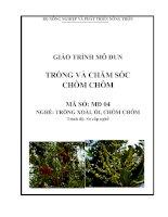 Giáo trình dạy nghề cho lao động nông thôn nghề trồng và chăm sóc chôm chôm