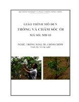 Giáo trình dạy nghề cho lao động nông thôn môđun   trồng và chăm sóc ổi