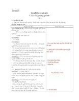 GIÁO ÁN TNXH LỚP 2 - TUẦN 22-25(CKTKN)