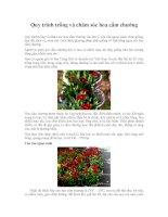 quy trình trồng và chăm sóc hoa cẩm chướng