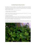 kỹ thuật trồng rau mồng tơi tại nhà