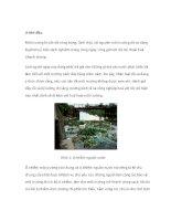 tiểu luận chỉ thị sinh học môi trường: môi trường nước