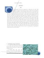 Tìm hiểu về tinh bột của các loại củ và lương thực   ứng dụng của chúng trong chế biến thực phẩm