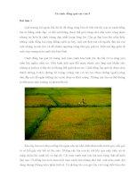Bài tập làm văn lớp 5 tả cánh đồng quê em
