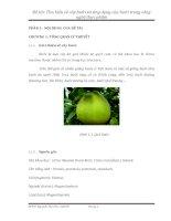 Tìm hiểu về cây bưởi và ứng dụng của bưởi trong công nghệ thực phẩm